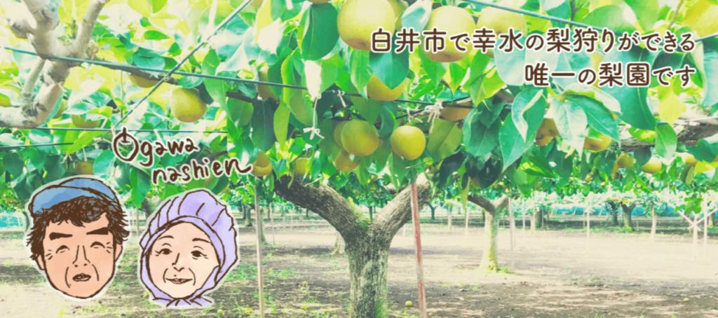 フルーツ狩り