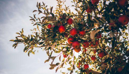 【2019秋・冬】関東圏でフルーツ狩りを楽しめるスポットを紹介します!